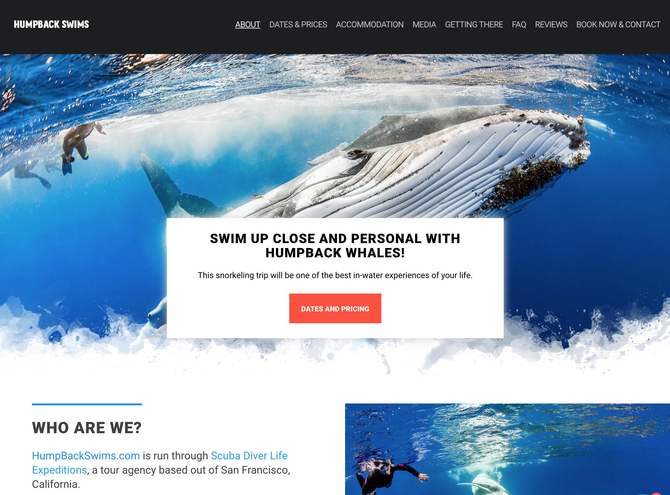 Humpback Swims